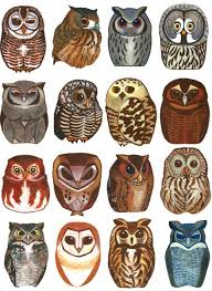 best 25 what do owls symbolize ideas on barra bar
