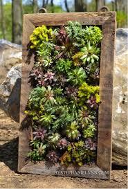 how to make a beautiful vertical succulents garden do it