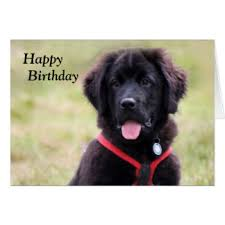 newfoundland puppy greeting cards zazzle