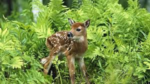 a sweet baby deer in the grass in forest wallpaper download 3840x2160