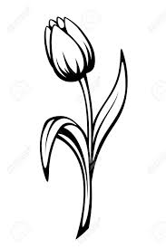 vector black contour of a tulip flower isolated on a white