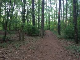 Maryland forest images The haunted pocomoke forest and its urban legends chesapeake png