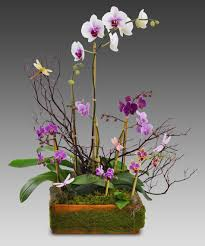 orchid arrangements blooming orchids basket floral arrangements florist