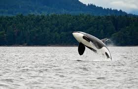 vancouver spirit halloween best destinations for whale watching
