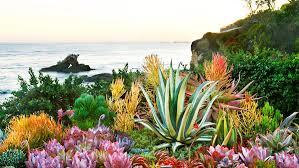 unusual succulents sunset