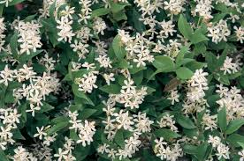 Best Fragrant Plants The 7 Best Smelling Plants For Your Garden