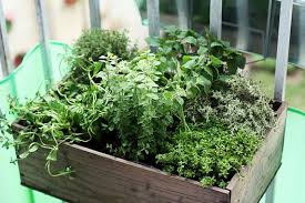 herb garden ideas for a balcony interior design