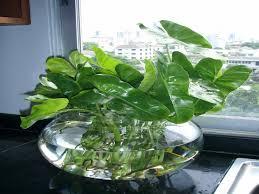 beautiful indoor plants low light u2013 maisonmiel