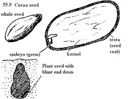 cocoaproj