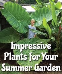 Summer Garden Plants - three impressive plants perfect for your summer garden logee u0027s