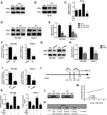 oncogenic kras targets muc16 ca125 in pancreatic ductal
