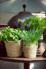 how to introduce greenery in the kitchen smartly