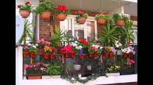 pot plants for balconies 77 cool ideas for home design and decor