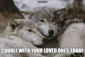Bacon Meme Generator - wolf meme generator the best wolf of 2018