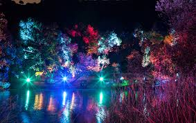 enchanted forest of light u2014descanso gardens