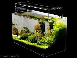 Aquascaping Shop Aquascaping Archives The Green Machine