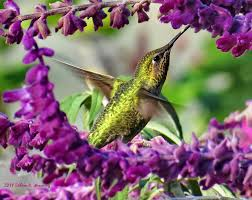 top 10 things you can do to attract hummingbirds bird watcher u0027s