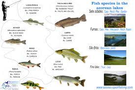 freshwater lake fishing in são miguel azores sport fishing