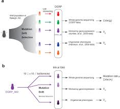 spontaneous mutations and the origin and maintenance of