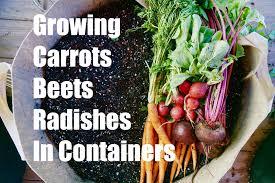 growing your fall garden 3 growing root vegetables in