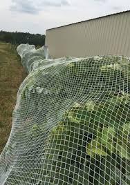 bird netting wraps around the vine or trellis to protect your