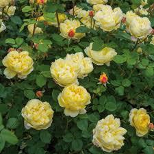 charles darwin repeat flowering popular searches