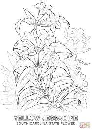 state flower coloring pages exprimartdesign com