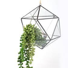 decoration lovable noahs hanging glass planter for succulent