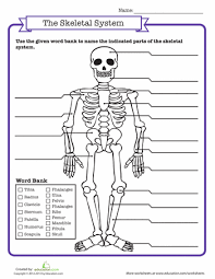 skeletal system quiz worksheets quizes and science worksheets