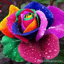 Cheap Flower Seeds - 2017 beautiful flower seeds colourful rainbow rose seeds for plant