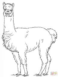 alpaca coloring pages free coloring pages