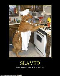Dog Cooking Meme - slaved i has a hotdog dog pictures funny pictures of dogs