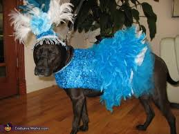 Lab Halloween Costume Ideas 613 Best Dog Halloween Costumes Images On Pinterest Dog