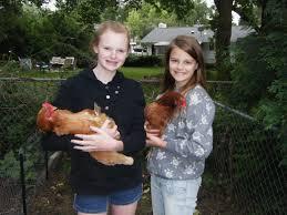Backyard Chickens 101 by Backyard Chickens 101 U2013 Simply Chic