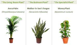 Plants For The Bedroom by The Best Indoor Plants For Your Home Office Get Fresh Air