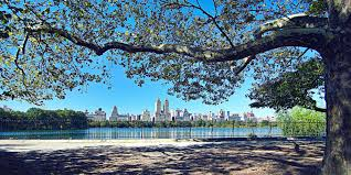 a politician would like new york trees to their own email