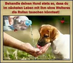 sprüche hund treue 64 best hund images on quotes cat and doggies