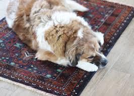 Pet Friendly Area Rugs Pet Friendly Home Design Dog On It Parks Blog