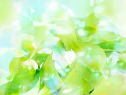 green color wallpaper 1600px saverwallpaper com