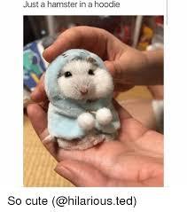 So Cute Meme - just a hamster in a hoodie so cute cute meme on conservative memes