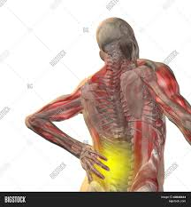 3d Human Anatomy High Resolution Concept Or Conceptual 3d Human Male Or Man Anatomy