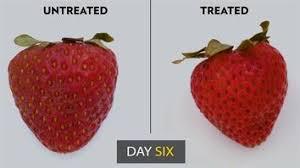 fruit fresh innovative edible peel may keep your fruit fresh even longer