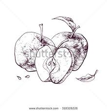 vector chalk drawn sketch apple icon stock vector 313287806