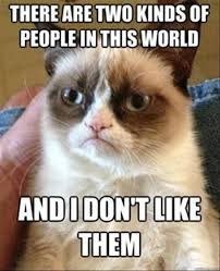 Random Cat Meme - got bored looked at random funny pictures found the grumpy cat