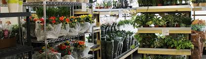 wholesale flowers american wholesale florist inc american wholesale