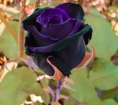 imagenes flores bellisimas ஜ ஜ azulestrellla ஜ ஜ flores exóticas de todo el mundo
