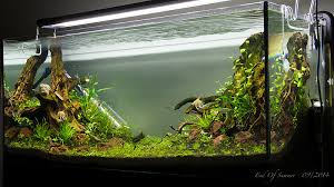 Aquascaping World End Of Summer 300l Planted Uk Aquatic Plant Society