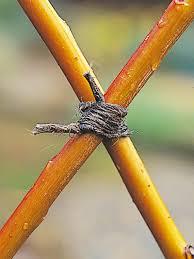 weave a living willow screen hgtv
