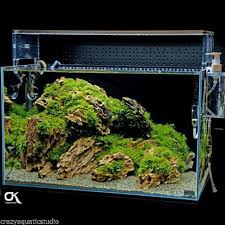 Aquascape Moss Aquascape Collection On Ebay
