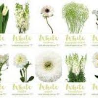 wedding flowers names white flower name flowers ideas for review